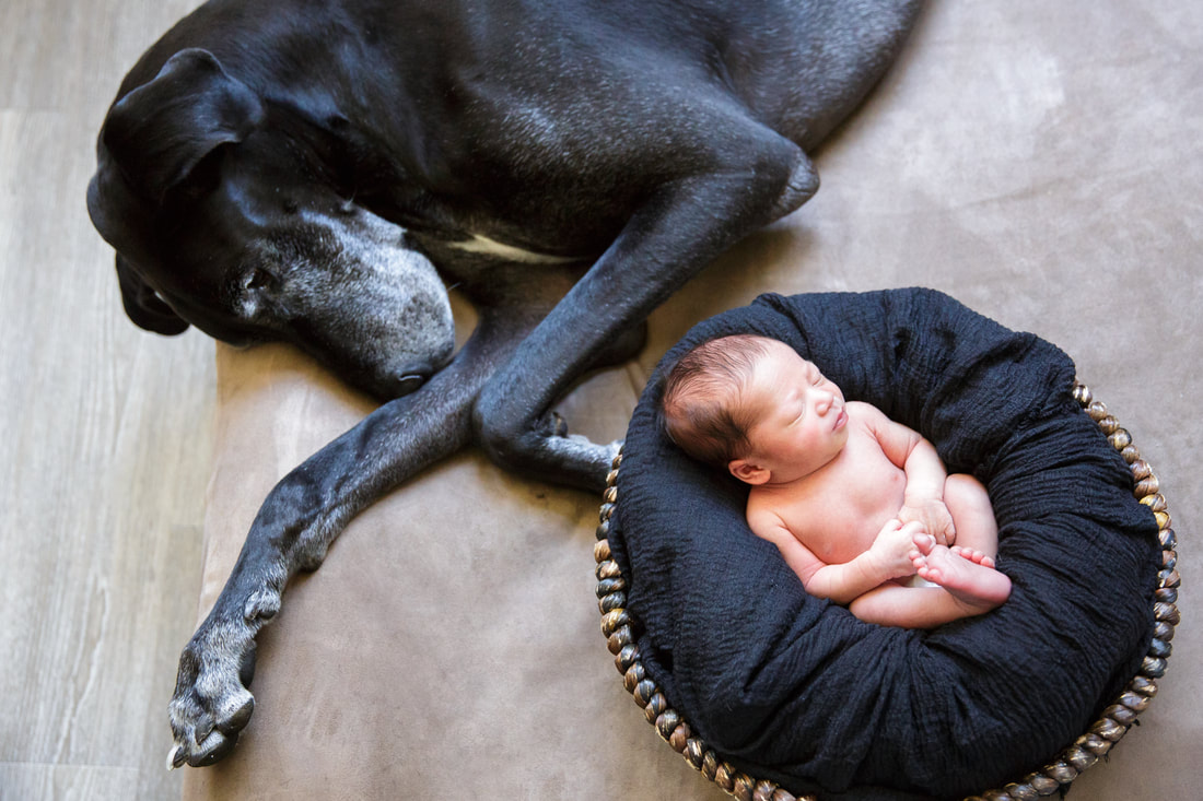 Newborn baby and dog Picture, San Francisco, Albena Ilieva Photography